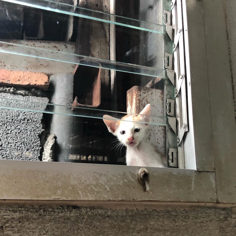 ลูกแมวรับรู้ความรักจริงๆ