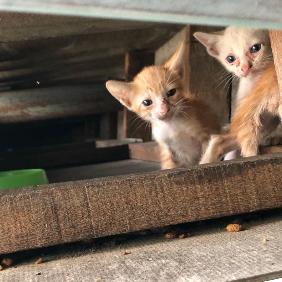 ลูกแมวที่ใต้หลังคา