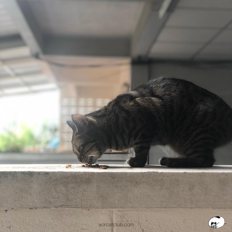 แมวกินอาหารเม็ด