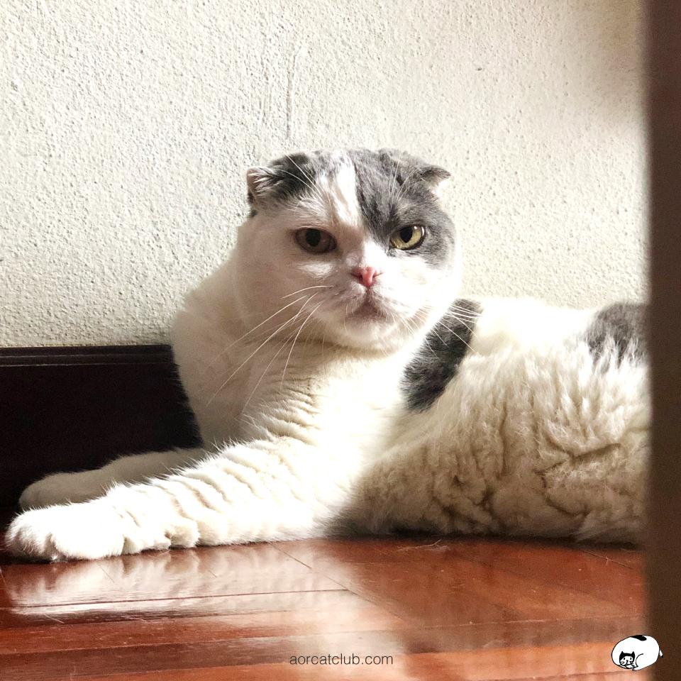 แมวมองเราอยู่ตลอดเวลา มองลึกเข้าไปถึงความรู้สึก