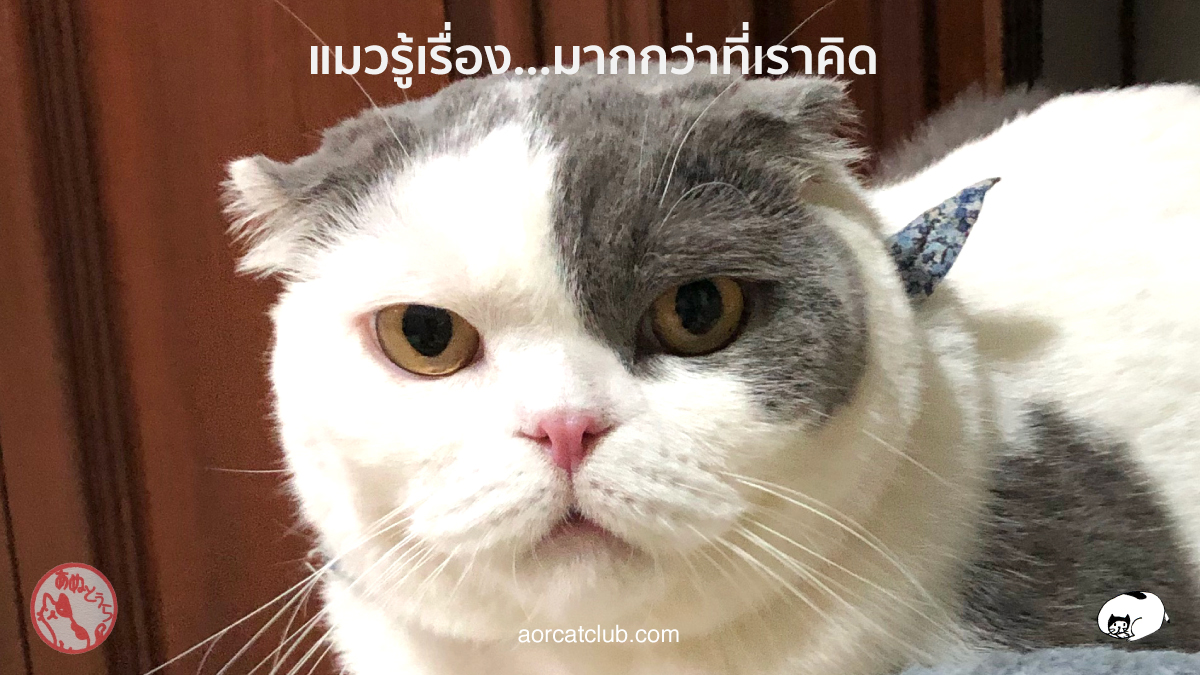 แมวรู้เรื่องเรามากกว่าที่คิด แมวรู้ว่าเรารัก แมวรู้ว่าเราเศร้า แมวรู้ว่าเราไม่สบาย แมวรู้ว่าเรามีความสุข