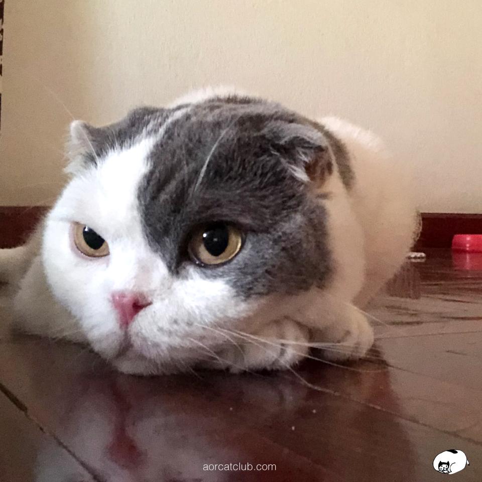 เวลาคนเศร้า แมวรับรู้ได้และเศร้าไปด้วย