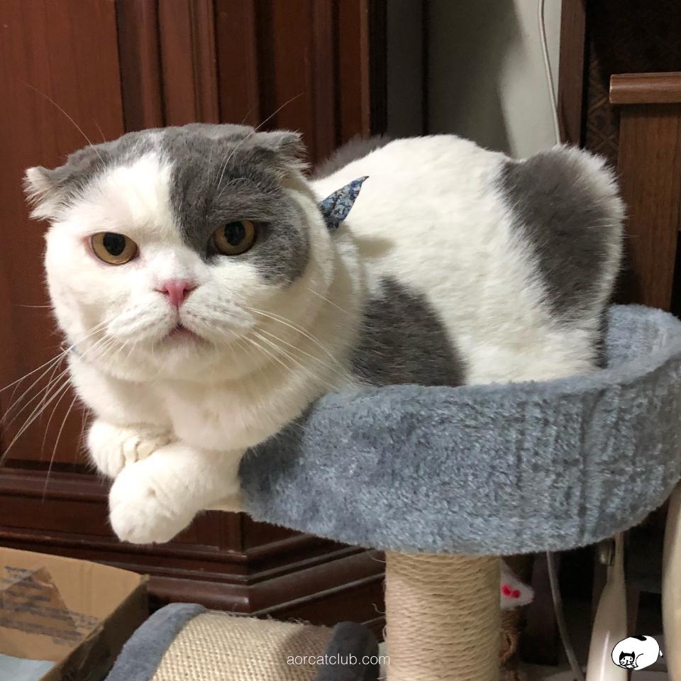 แมวขี้เห่อของเล่นใหม่ แมวรู้ว่าเรารักเขา