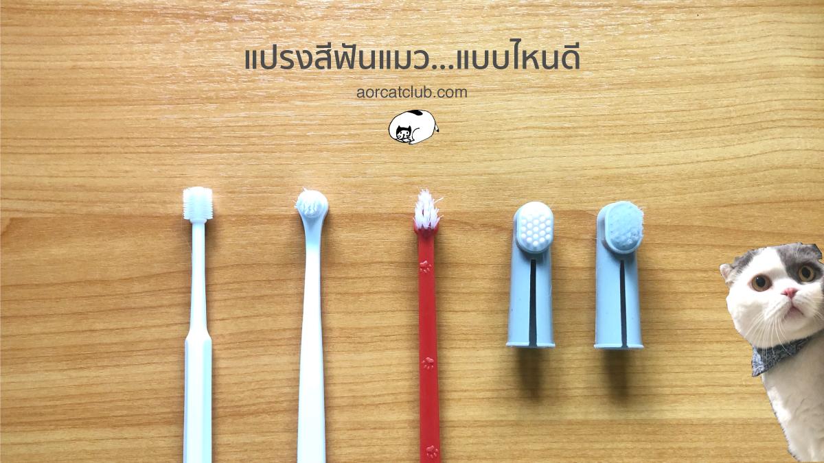 เลือกแปรงสีฟันแมวแบบไหนดี