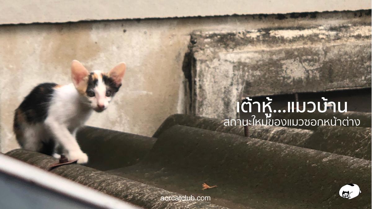จากแมวซอกหน้าต่าง ได้บ้านกลายเป็นแมวคุณหนู